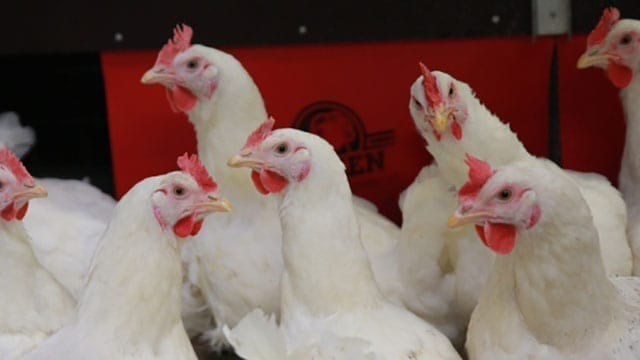 Olam partners with a French firm to boost poultry production