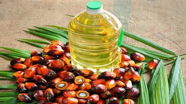 National Microfinance Bank to finance palm oil cultivation