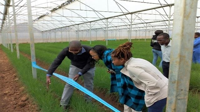 Centum's subsidiary Greenblade Growers signs up 250 farmers