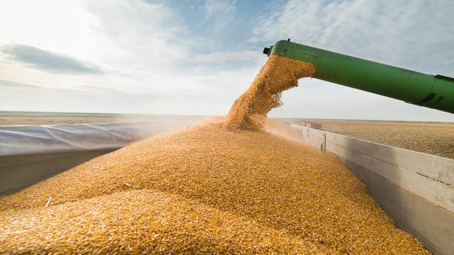 ADM, Bunge, Cargill and Louis Dreyfus partner to put grain trade on