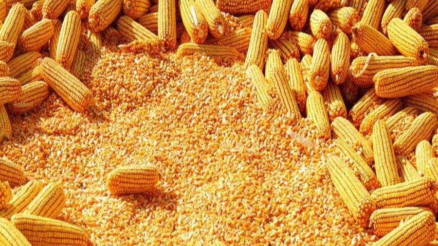 Tanzanian government lifts ban on maize export after a
