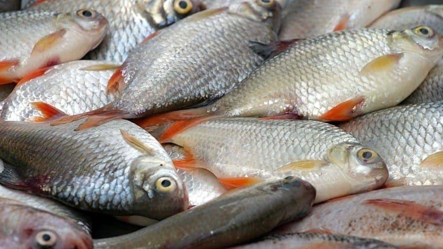 Kenya lifts ban on China fish imports as demand increases |