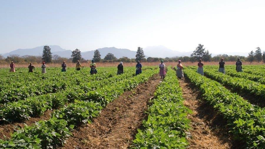 AFRICA'S NO.1 FOOD, BEVERAGE & MILLING INDUSTRY MAGAZINE | FOOD ...