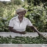 FAO partners Rabobank to build sustainable food system with pilot projects in Kenya and India