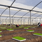 Evergreen Herbs in Kenya expands production to meet growing demand